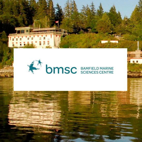 bmsc-3-portfolio-2017